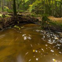 Jehnědenský potok v barvách podzimu