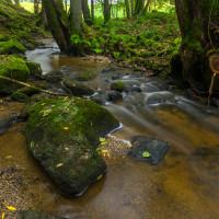 Jehnědenský potok pod hrází Karvašinského rybníka