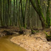 Jehnědenský potok v lese nad rybníkem