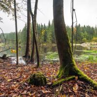 Karvašinský rybník