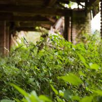 Cihelnu požírá vegetace