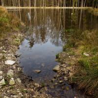 Nepříliš mocný potůček je levostranným přítokem ne o mnoho většího Okrouhlického potoka