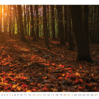 V lese mezi lomem a Novosedly